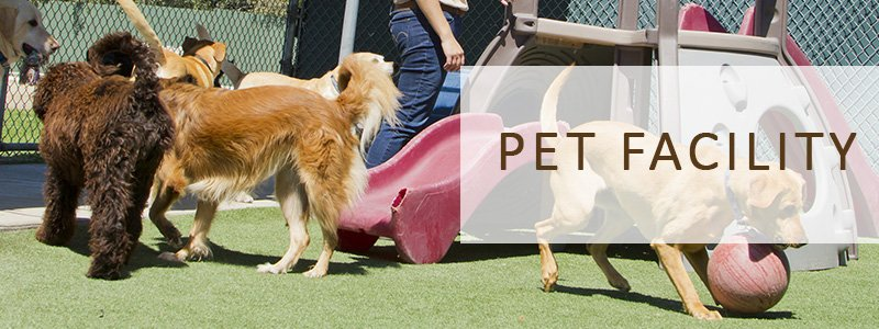 Artificial Grass Turf For Pet Facilities