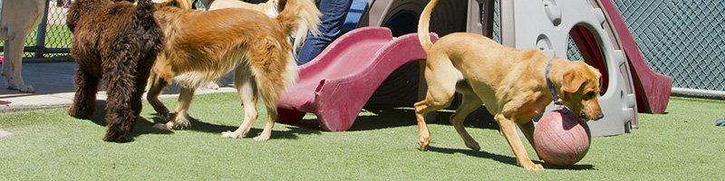 Commercial Artificial Grass Pet Facility